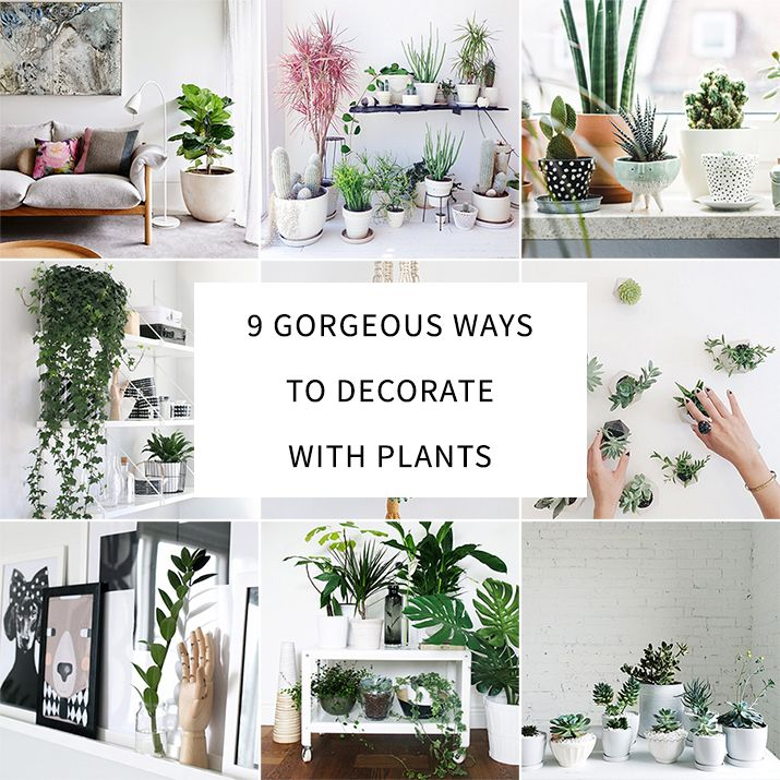 Pin Ups: Decorating with Plants | knittedbliss.com